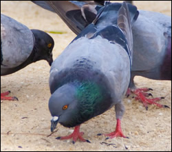 Altamonte Springs bird control