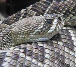 Altamonte Springs snake removal